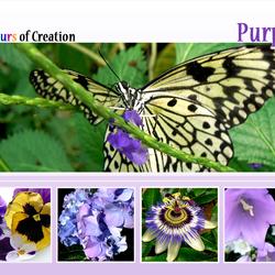COC: Purple