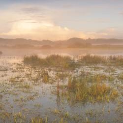 Dutch Grasslands in the Mist