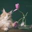 Wodan met zijn tulpen