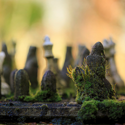 Nature takes over my chess game