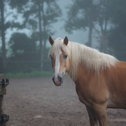 Paard in de mist