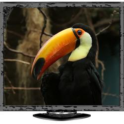 reuzentoekan op tv ?