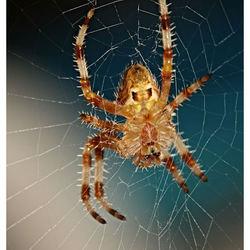 In zijn web gevangen