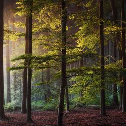 Rainbow Forest.