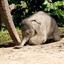 Jonge Olifant  in de berm_DSC8744