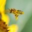 bij onder de nectar
