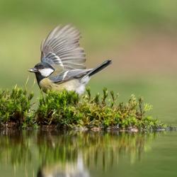 Vleugel...