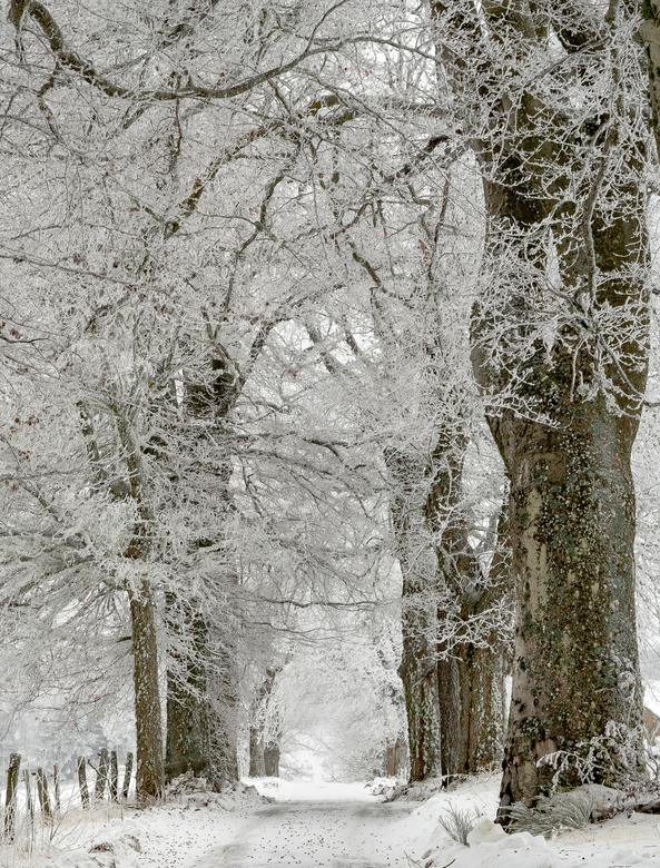 Winterfairytale - Winters pad met besneeuwde bomenrij<br /> <br /> Dank voor alle reacties op mijn vorige foto &#039;Propriété privée&#039;.