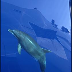 Dolfijn voor de boeg!