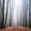Mistige wandeling in het vijlenerbos