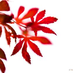 赤い Akai