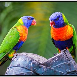 Papagaaien voeren op de camping