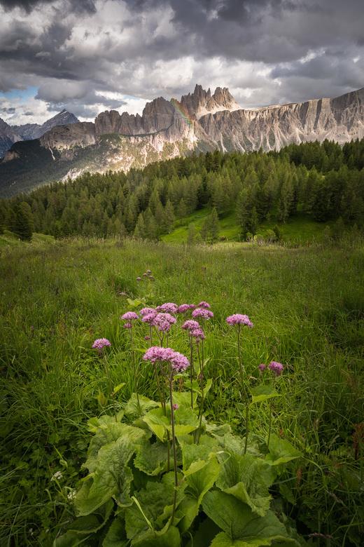 Mountain Vista -