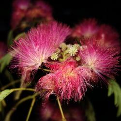 Bloemen in de nacht