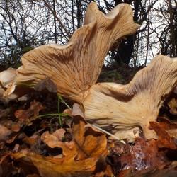 paddenstoelen met mot