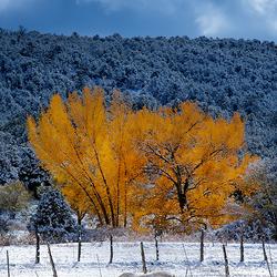 vroege berg sneeuw
