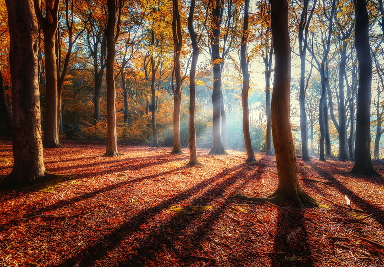 Autumnatic - Wat was het zondagmorgen genieten in het bos...