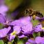 Bijen bezoek
