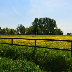 Landschap Bloemen