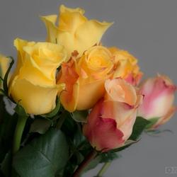 zomaar een paar rozen