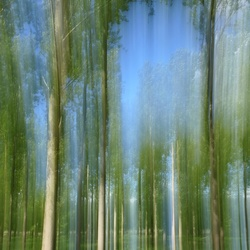 ICM forest