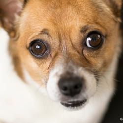 hondenvriendje