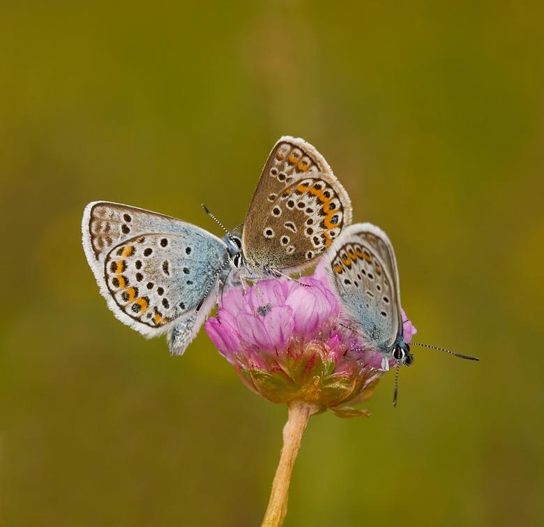 Blues on top - Vandaag nogmaals een foto van afgelopen zaterdag tijdens de vlinderdag samen met Friends (Jan en Wil).<br /> <br /> Heerlijk gewoon o