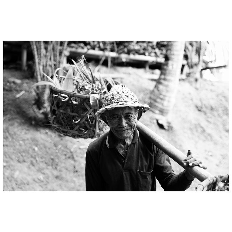 Bali 2019 Ricefields -
