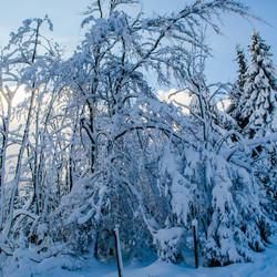 Winterbergen