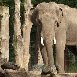 Bomen - olifant