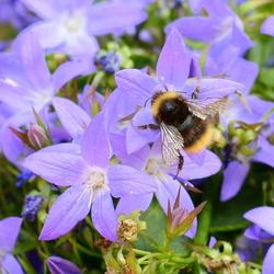 Bee Yourself!