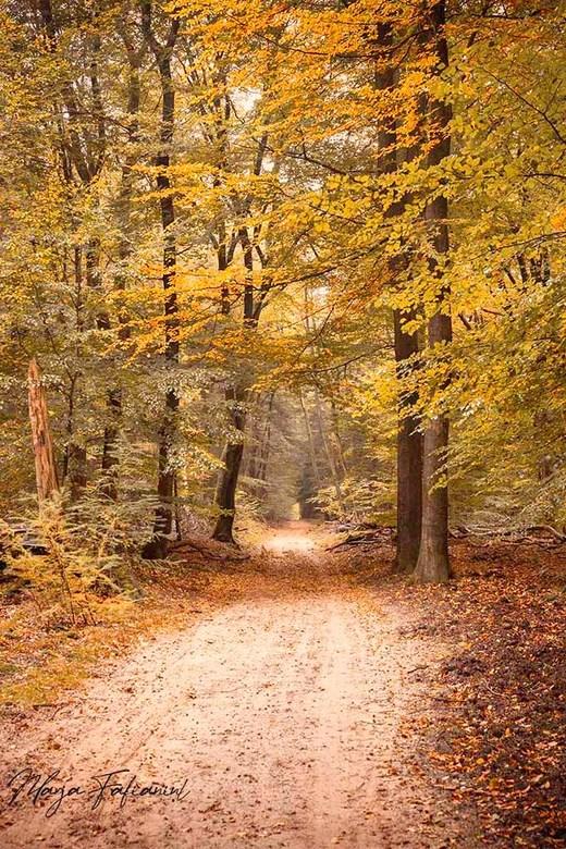 Herfst - Een LAW wandeling door het bos bij Garderen levert al mooie Herfstkleuren op. Helaas geen Herten waar ik op gehoopt had.