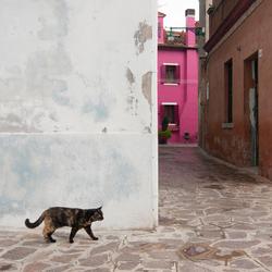 Kat in Burano