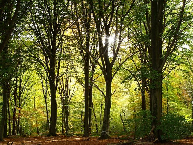 A peek through the trees - Mijn lieveling plek in bos. Na een steile helling  daal je af naar dit schitterende plekje, waar ik altijd tot rust kom. Af