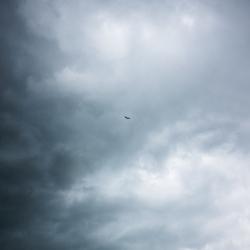 Fly Away.. - Nieuwkoop