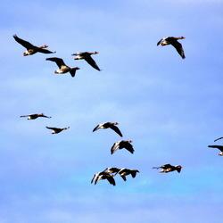 Formatie vliegen