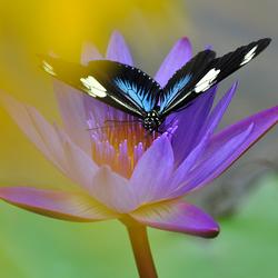 Vlinders in Zutphen