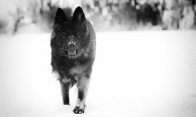 Predator  - Inzending fotowedstrijd dieren !!