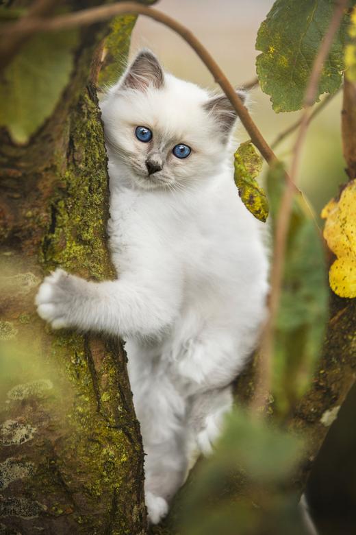 Kitten -