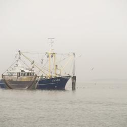 Vissen in de Mist