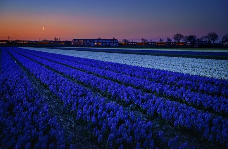 Bluetiful - Vlak voor de maan verdwijnt en vlak voor de zon opkomt bij de Zilk....