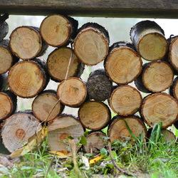 Boomstammmen onder een bankje