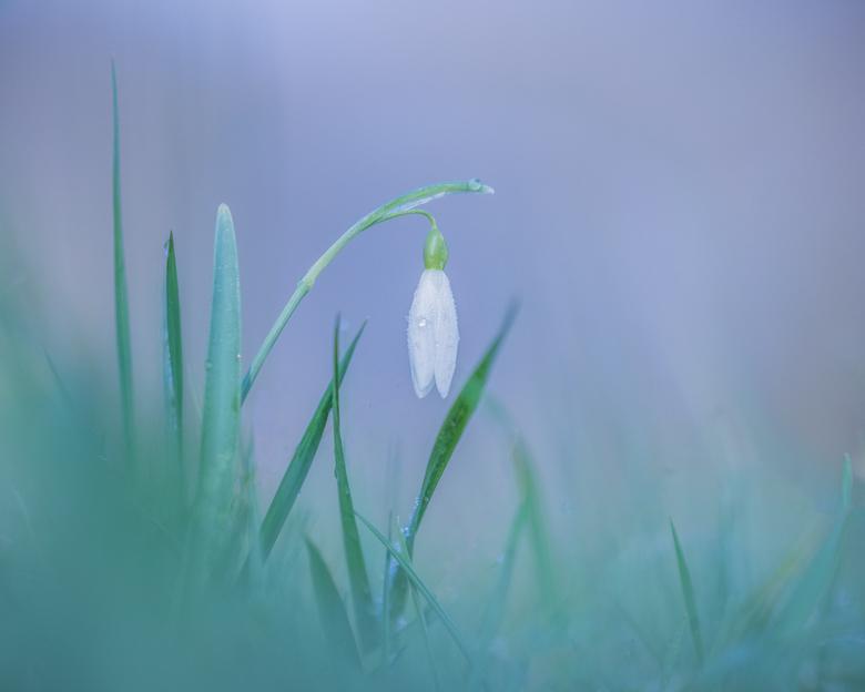 Cold and Lonesome - Na een lange tijd weer eens de macrolens op de camera gezet en met 4 medezoomers op een mooie maar koude ochtend naar Amelisweerd