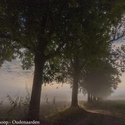 Mist in de Dordtse polder