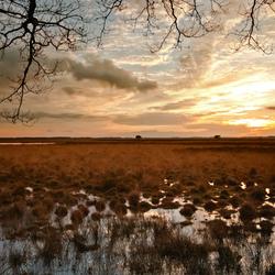 De Nederlandse Heide