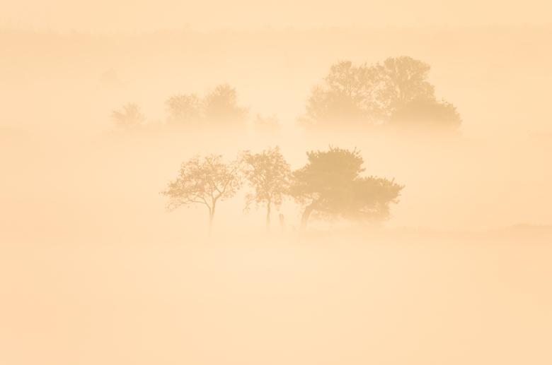 Bomen in de mist 2 - Vanuit de uitkijktoren bij de schaapskooi in Ruinen kan je met een flinke telelens de bomen in het veld fotograferen.