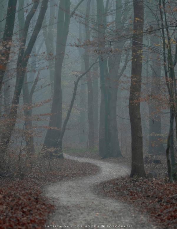 Misty forest  - Bospaadje tijdens een hele mistige ochtend vandaag.