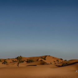Zand, zand, zand... en een paar boompjes