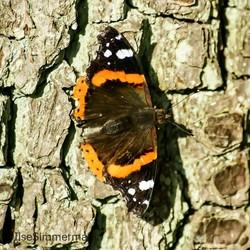 Vlinder op boom