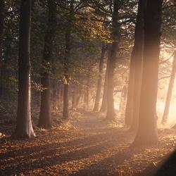 Asserbos in de herfst